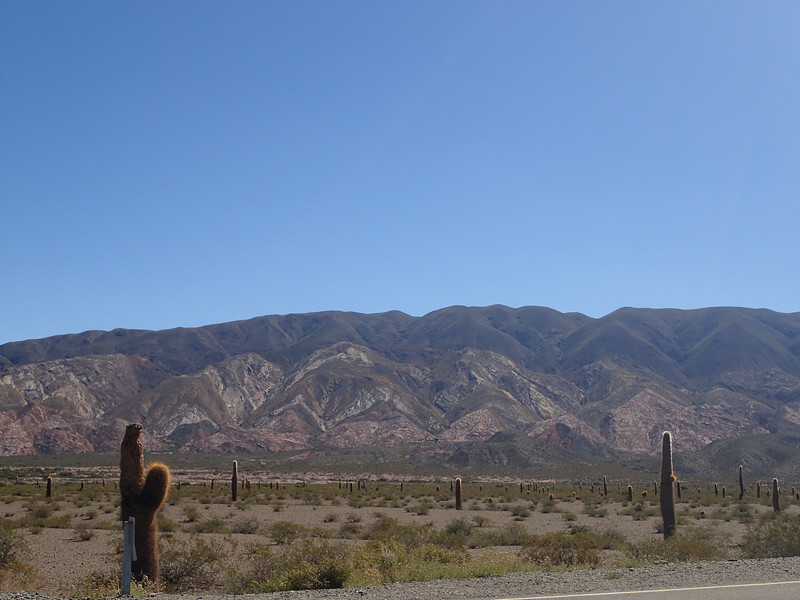 Parke Nacional Los Cardones