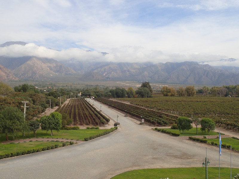 Vineyard in Cafayate