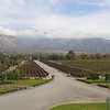 Vineyard in Cafayate