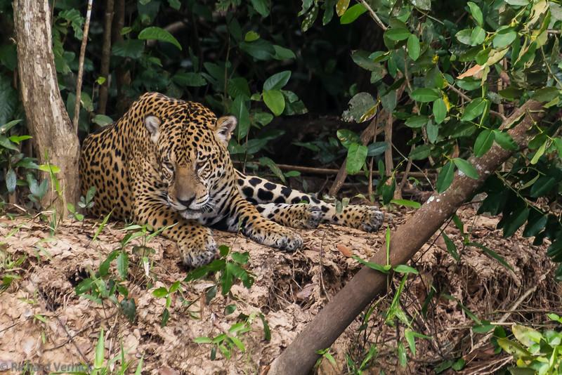 Pantanal Mato Grosso Area