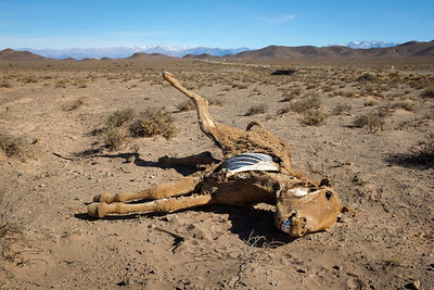 Burro carcass