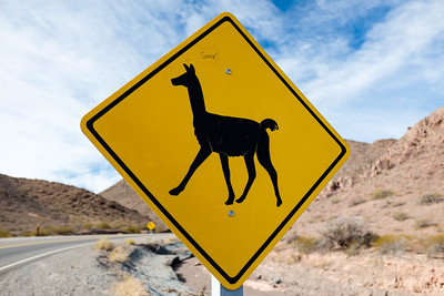 Llama and Vicuna crossing