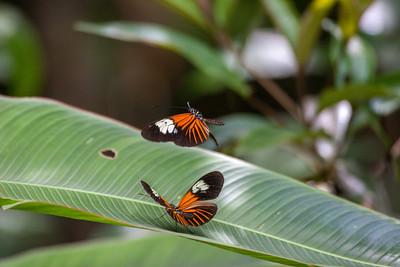 Mating Flight II