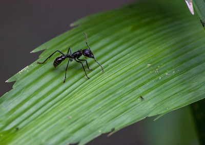 Big Ant, Little Ant