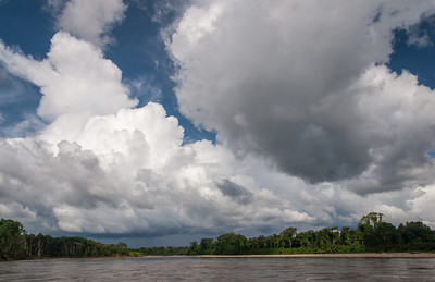 Along the Tambopata River