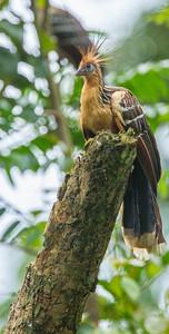 Amazonia Lodge, Manu National Park, Peru, 2011