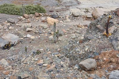 habitat various cacti