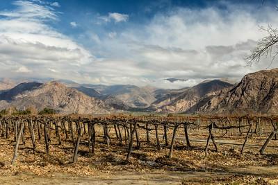 Cafayate vinyards