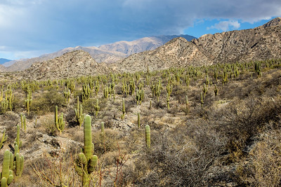Outstanding cactus groves