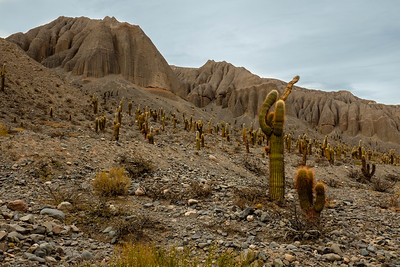 Quedabra del Toro was another stunning part of our two day loop north of Salta