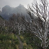 Dead forest with misty Cuernos in the background. Sort of Tolkienesque.<br />