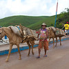 Old man with horses, Cortes, Pernamucco, Brasil