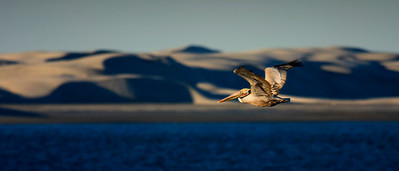 Flight of the Pelican, Baja