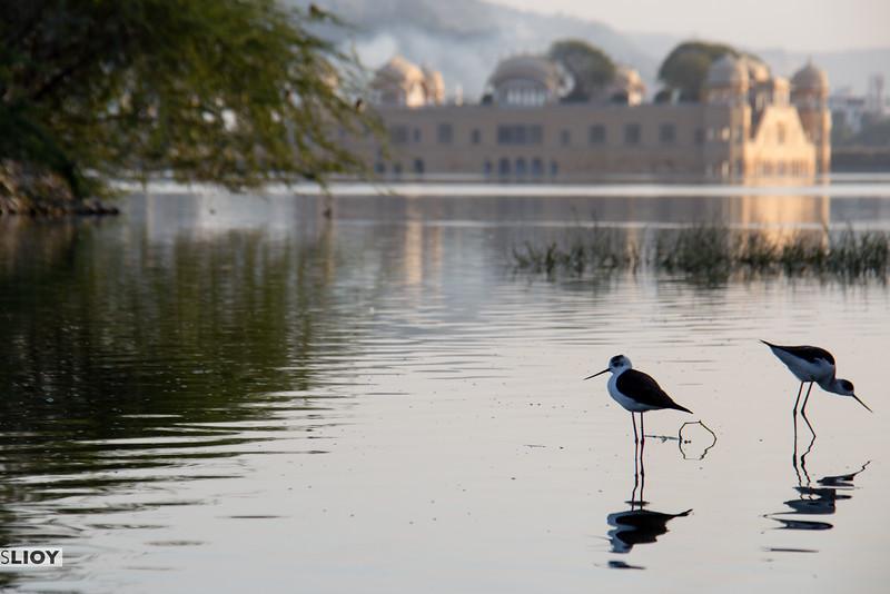 Wildlife near the water palace.