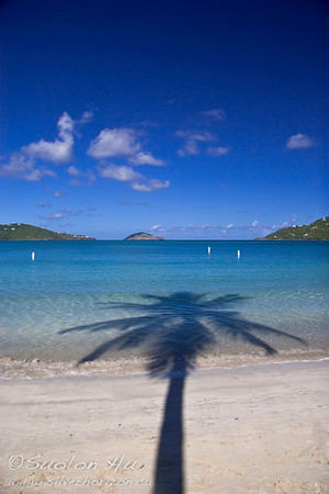 Palm tree silhouette at Magens Bay, St. Thomas