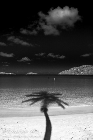 Silhouette of a Palm tree at Magens Bay, St. Thomas (bw)
