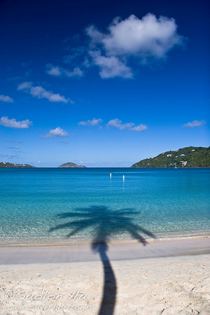Silhouette of a Palm tree at Magens Bay, St. Thomas