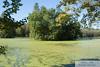 DSC_0453 - Magnolia Gardens