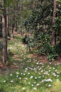 Lily Path