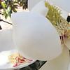 Inside a Magnolia Blossom - Hopelands Gardens - Aiken, SC - 5/15/10