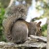 Squirrel in Children's Garden - Brookgreen Gardens, Murrells Inlet, SC  3-25-11