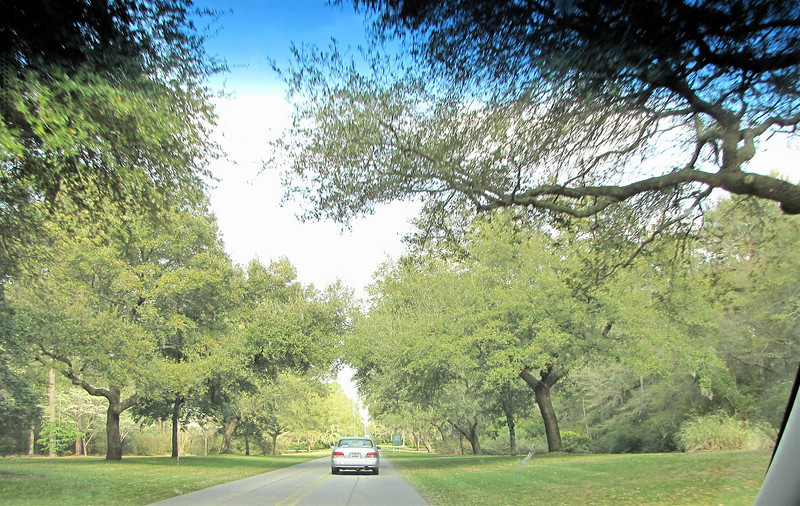 Dream Come True - Driving Down Entrance to Brookgreen Gardens, Murrells Inlet, SC  3-25-11