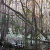 Quiet Stillness - Dungannon Heritage Preserve - Charleston, SC Area
