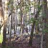 Peaceful Habitat - Dungannon Heritage Preserve - Charleston, SC Area