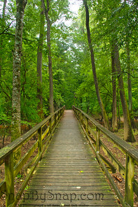 Board Walk in Congaree National Park