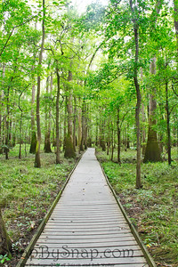 The Boardwalk in Congaree National Park