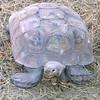 Tortoise - This Is My Better Side - Cypress Gardens, Moncks Corner, SC