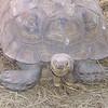 Tortoise Smiling Face - Cypress Gardens, Moncks Corner, SC