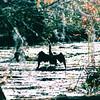 Cormorant - Cypress Gardens, Moncks Corner, SC  11-19-04
