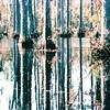 Cypress Swamp - Cypress Gardens, Moncks Corner, SC  11-19-04