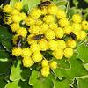 Bug Attracting Flowers - Cypress Gardens, Moncks Corner, SC