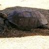 Tortoise - Cypress Gardens, Moncks Corner, SC