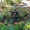 Gardens Entrance - Cypress Gardens, Moncks Corner, SC