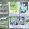 Signage on Invasive Species - Great Swamp Sanctuary - Walterboro, SC