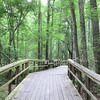Boardwalk - Great Swamp Sanctuary - Walterboro, SC