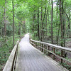 Plenty of Wandering Trails - Great Swamp Sanctuary - Walterboro, SC