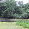 Pond at the Intersection of Trail Options - Great Swamp Sanctuary - Walterboro, SC