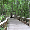 Wetland Boardwalk - Great Swamp Sanctuary - Walterboro, SC