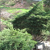 Greenville,SC - Rock Quarry Gardens - Looking Down From Street Above