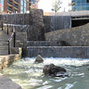 Waterfalls - Downtown Along the Reedy River, Greenville, SC