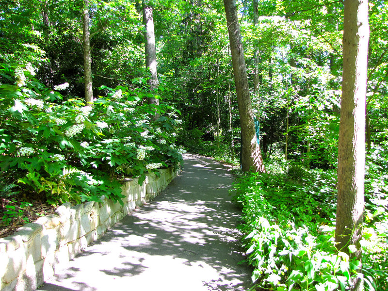 Shade and Sunlight Make Interesting Shapes in the Forest - Hatcher Garden and Woodland Preserve - Spartanburg, SC
