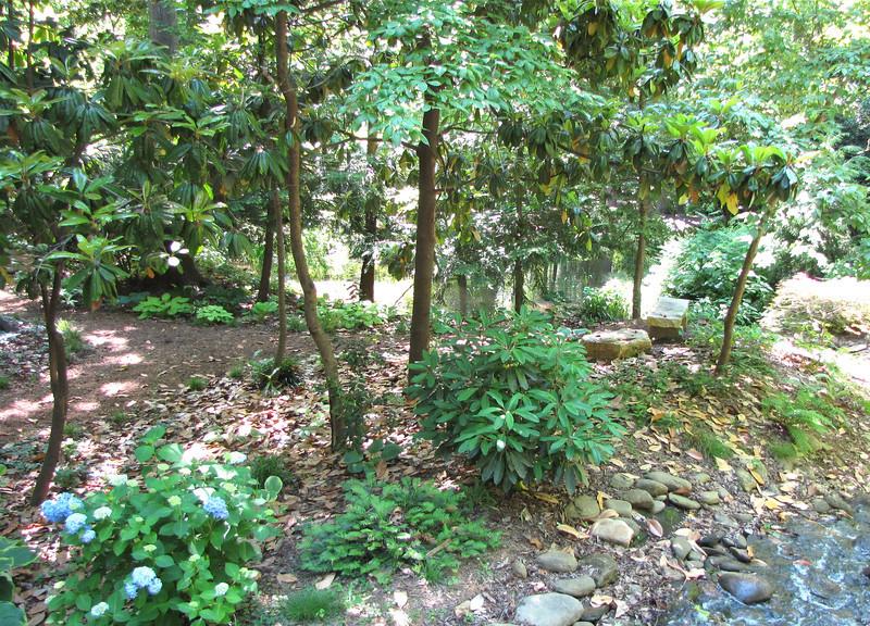 Woodland Area - Hatcher Garden and Woodland Preserve - Spartanburg, SC