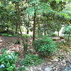 Woodland Area - Hatcher Garden and Woodland Preserve - Spartanburg, SC