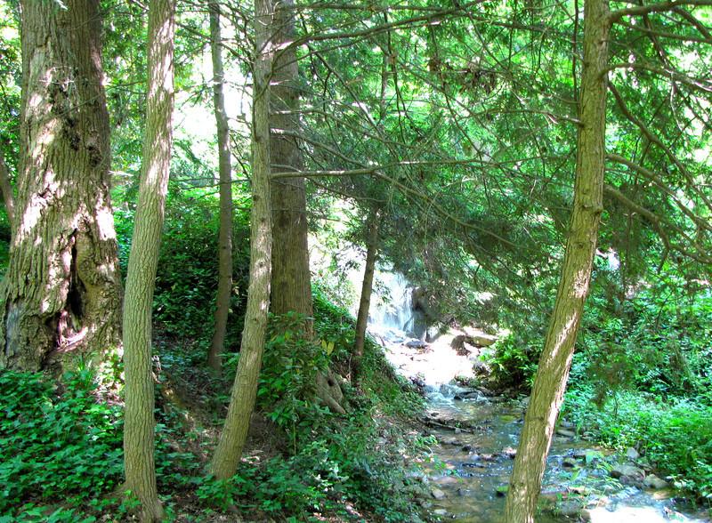 Another Stream with Waterfall - Hatcher Garden and Woodland Preserve - Spartanburg, SC