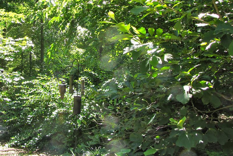 Bird Feeding Area - Hatcher Garden and Woodland Preserve - Spartanburg, SC
