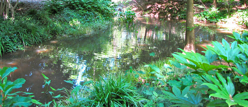 Stream Bank and Reflections - Hatcher Garden and Woodland Preserve - Spartanburg, SC